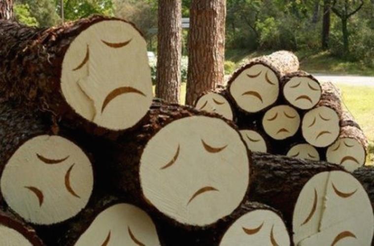 Зачем исчезают леса в Подмосковье?